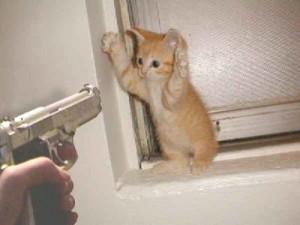 prest_cat